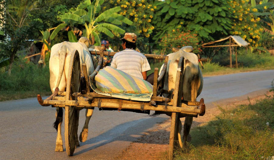 image of man riding on cow trolly